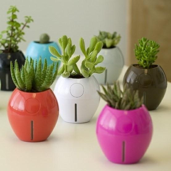 Piante interno piante appartamento piante interno for Zamioculcas cura