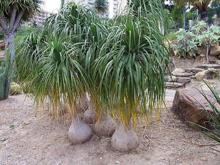 Esemplari di piante mangiafumo
