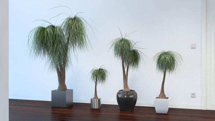 Alcune piante mangiafumo