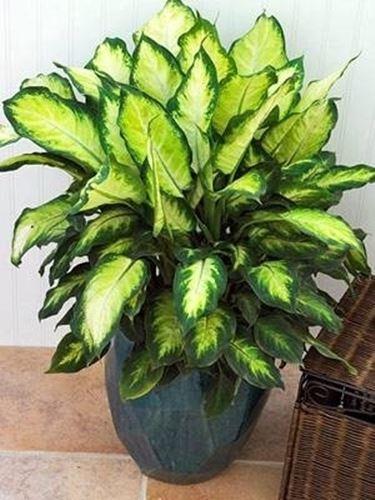 pianta per interni