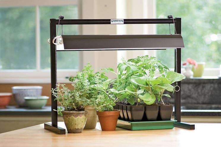 Piante da interno resistenti piante appartamento for Piante appartamento design