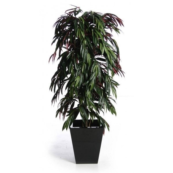 Piante da interno resistenti piante appartamento for Piante da interno alte
