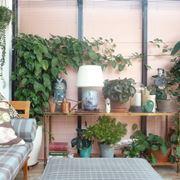 Soggiorno decorato con piante da appartamento