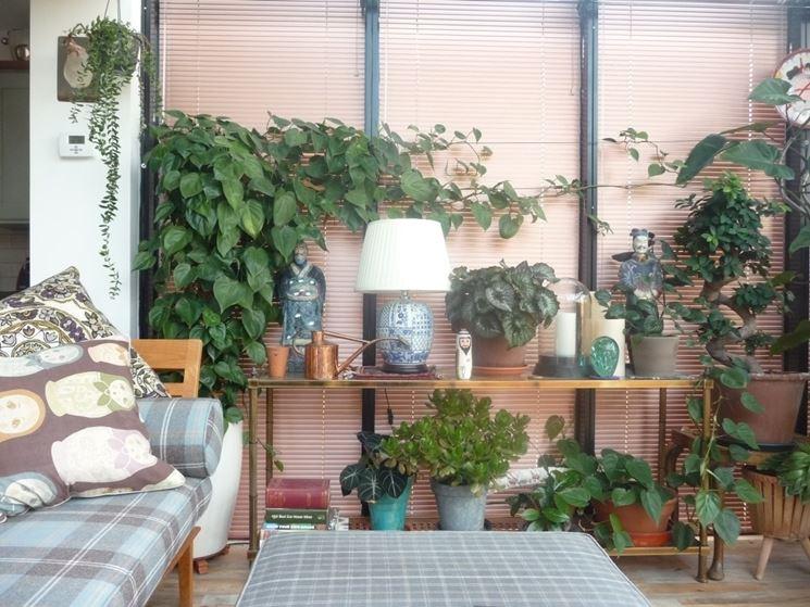 Piante verdi da appartamento - Piante appartamento - Piante da appartamento