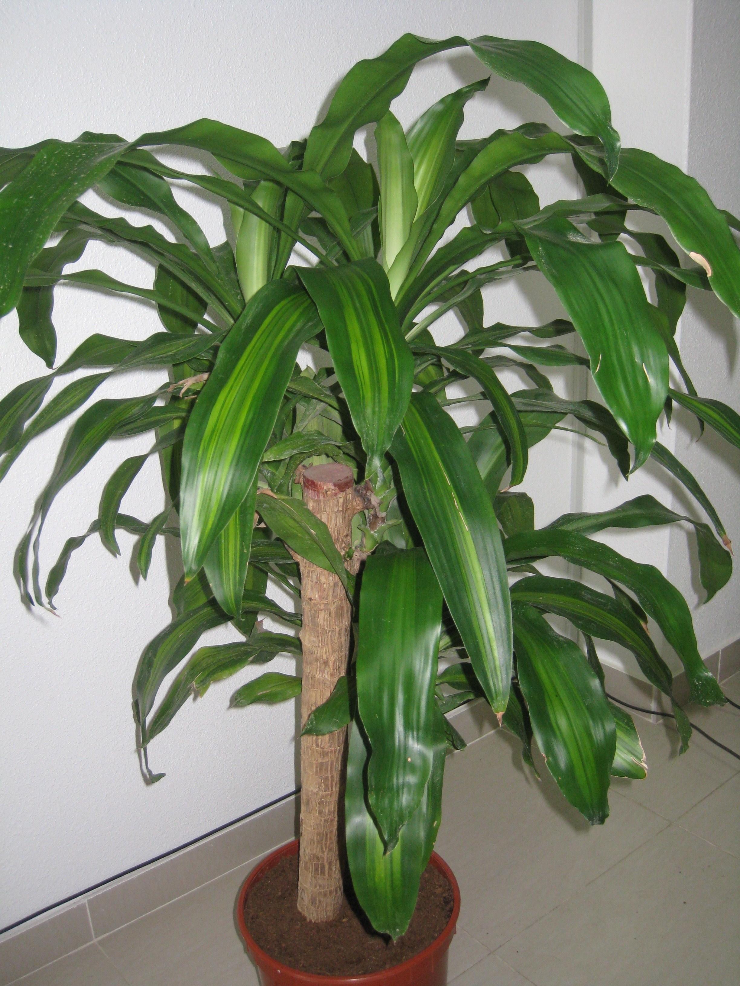 piante verdi da appartamento piante appartamento