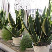 Delle piante accanto ad una finestra