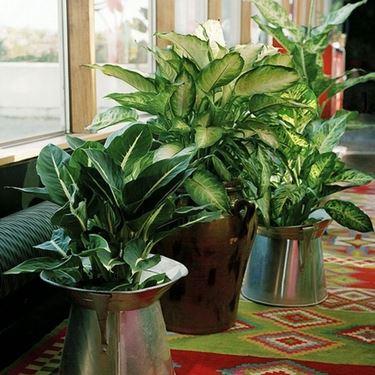 Delle piante in degli eleganti vasi di metallo