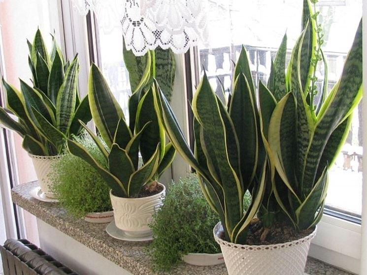 Piantine appartamenti piante appartamento piante da - Piante interno poca luce ...