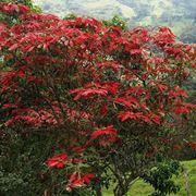 Un albero di stella di natale nella sua terra di origine