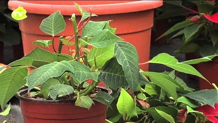 Periodo di vegetazione