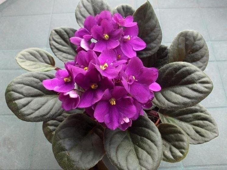 Primo piano dei fiori