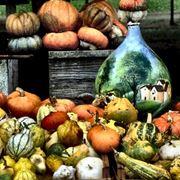 Varietà zucche decorative