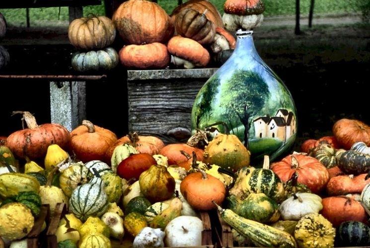 Variet� zucche decorative