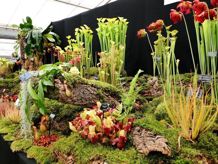Assortimento di piante carnivore