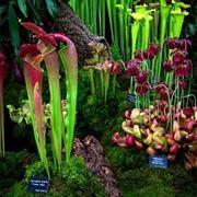Differenti varietà di piante carnivore