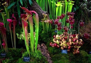 Differenti variet� di piante carnivore