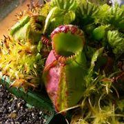 Una bellissima collezione di piante carnivore.