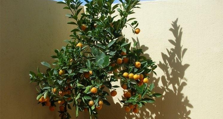 Best Alberi Da Terrazzo Soleggiato Pictures - Idee Arredamento Casa ...