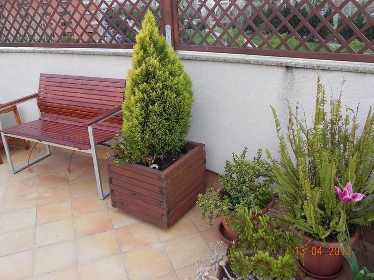 Alberi da terrazzo piante da terrazzo alberi per il for Piante da terrazzo sempreverdi