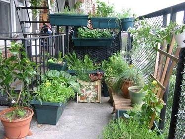 Balcone con piante