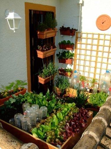 ... sul balcone - Piante da terrazzo - Consigli per coltivare in balcone