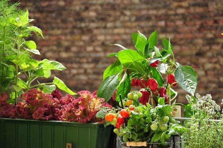 Fiori e ortaggi sul balcone