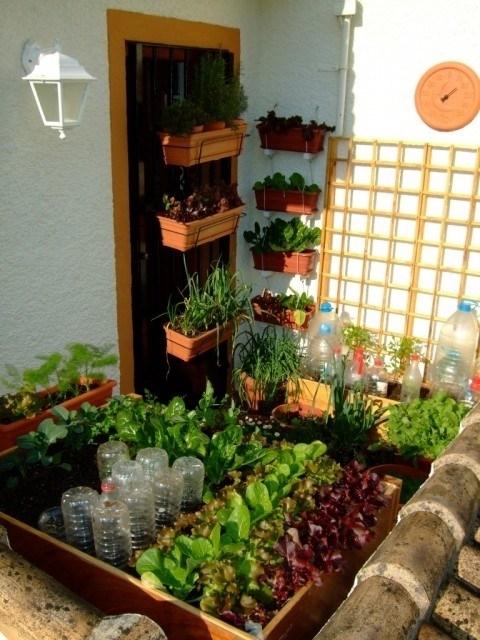 Coltivare sul balcone - Piante da terrazzo - Consigli per coltivare ...