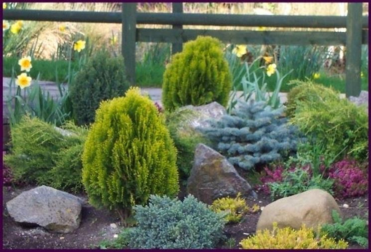 Giardino di conifere nane