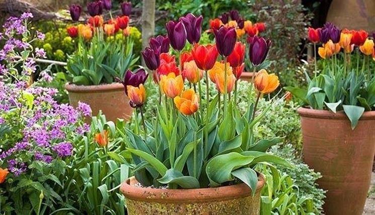 Terrazzo con fiori arredare terrazzo consigli e soluzioni for Arredare un terrazzo con piante e fiori