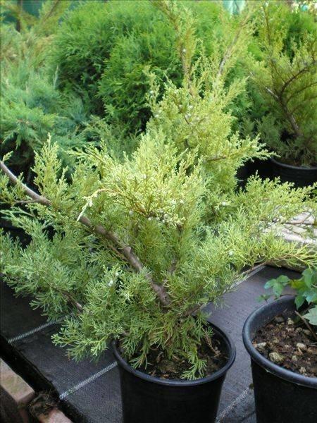 Fiori da terrazzo piante da terrazzo come scegliere i for Migliori piante da terrazzo