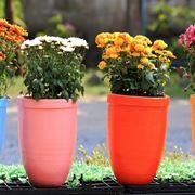 fiori da vaso