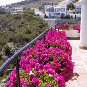 Piante resistenti al sole - Piante da terrazzo - Piante che ...
