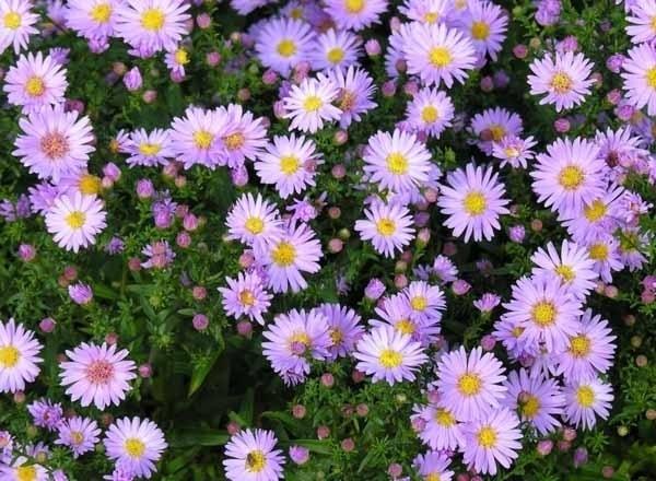 Fiori per terrazzi - Piante da terrazzo - Scegliere i fiori per il ...