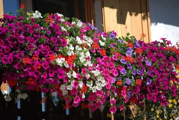 Giardino pensile piante da terrazzo come realizzare un - Piante da giardino fiorite ...