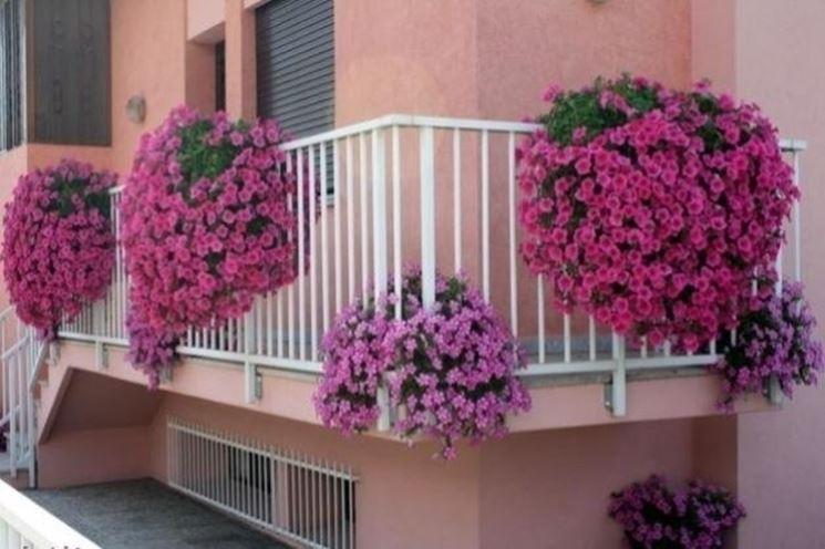 abbastanza Piante da balcone resistenti - Piante da terrazzo - Scegliere le  EQ47