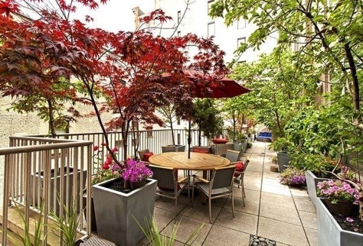 piante da balcone resistenti - piante da terrazzo - scegliere le ... - Piante Sempreverdi Da Vaso Balcone