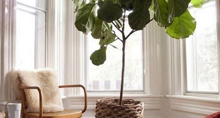 Piante da vaso sempreverdi piante da terrazzo piante - Piante verdi interno ...