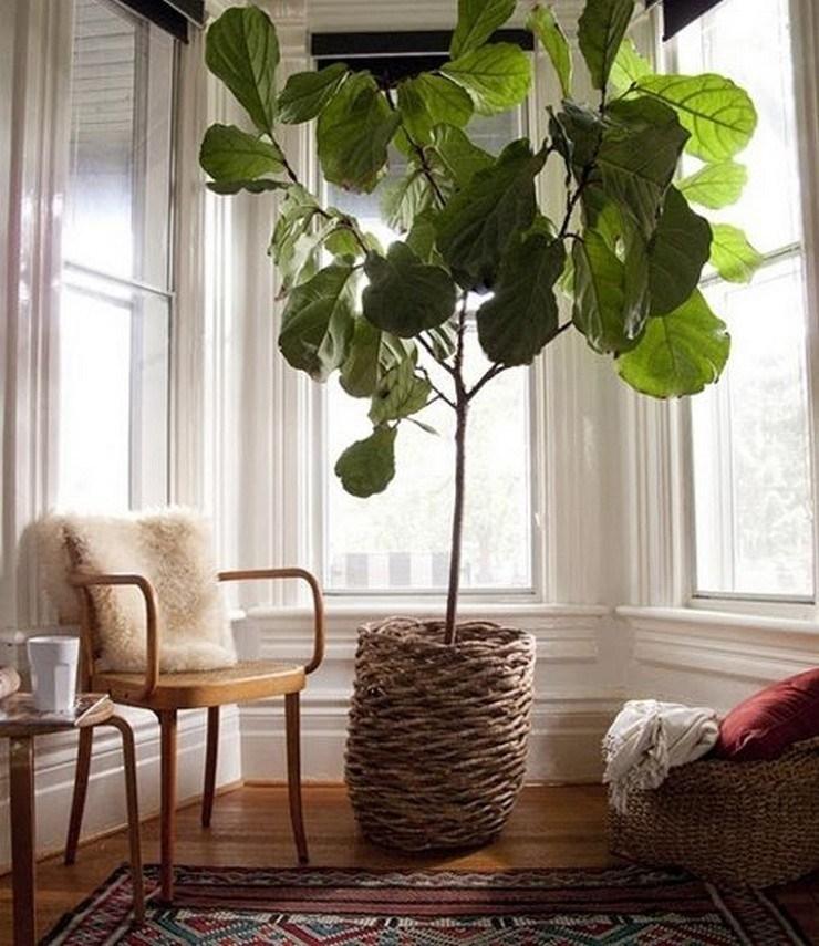 Piante da vaso sempreverdi - Piante da terrazzo - Piante sempreverdi da interno