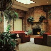 piante da esterno sempreverdi