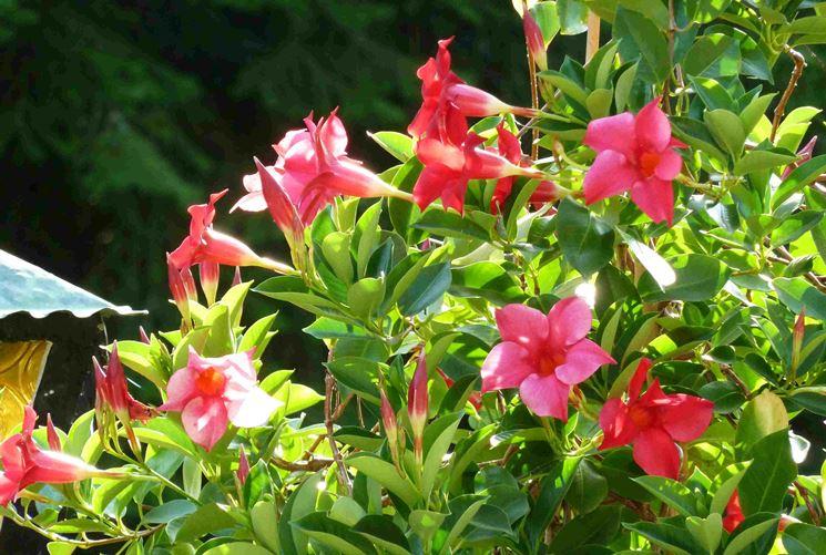 Piante resistenti al sole piante da terrazzo piante for Fiori da terrazzo