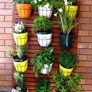 piante resistenti al sole