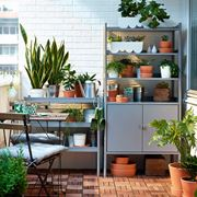 piante da esterno in vaso