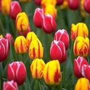 piante sempreverdi da vaso