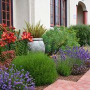 piante sempreverdi da balcone - piante da terrazzo - come ... - Piante Sempreverdi Da Vaso Balcone