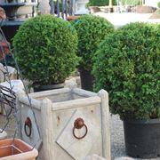 piante da terrazzo sempreverdi