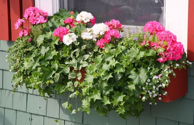 Piante vaso piante da terrazzo migliori piante da vaso for Piante invernali da esterno vaso