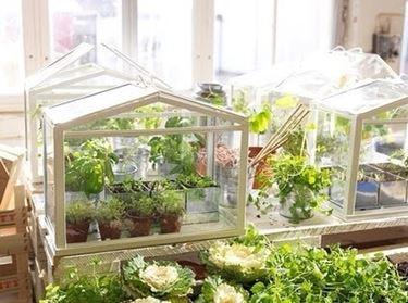 Un esempio di piccola serra da balcone a forma di casetta