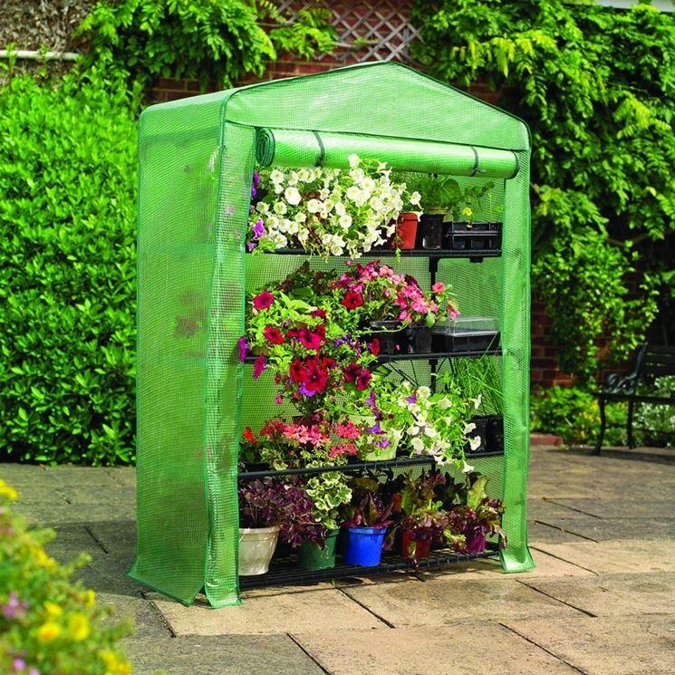 Serre da terrazzo piante da terrazzo piante da serra for Piante a poco prezzo
