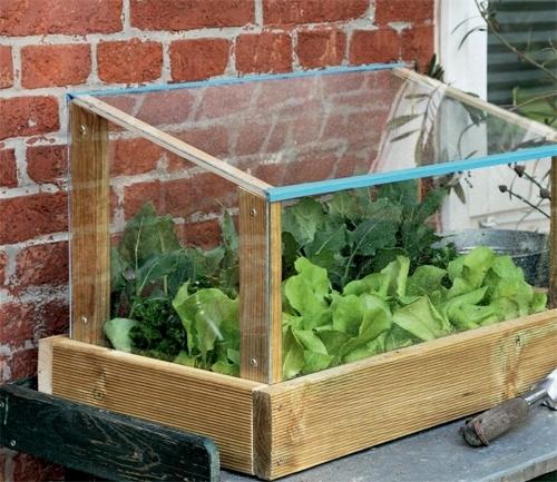 Serre da terrazzo piante da terrazzo piante da serra in terrazzo - Terrazzo fai da te ...