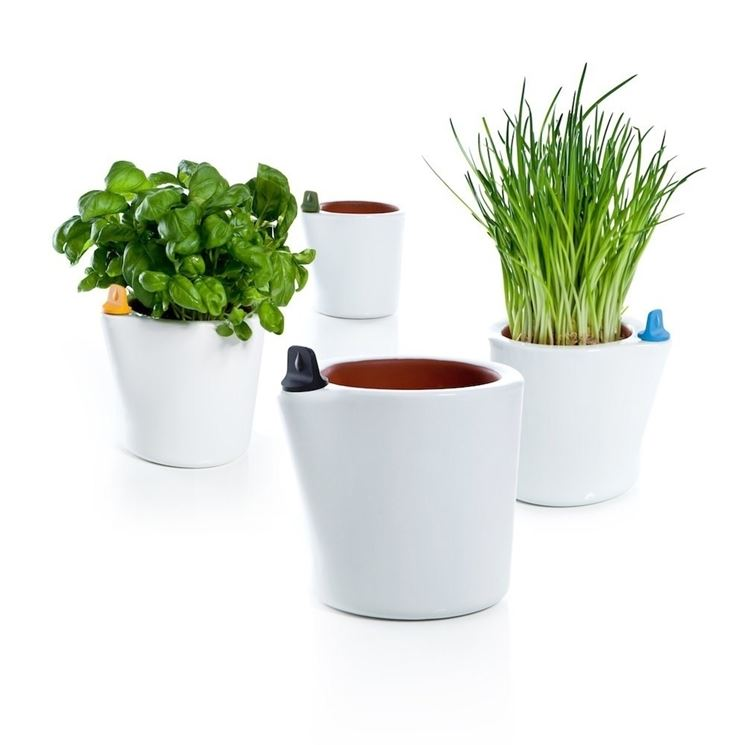 Vasi da fiori piante da terrazzo fiori in vaso - Vasi piante design ...